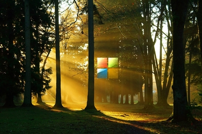 High def wallpaper of Microsoft's new 2012 logo in the woods.